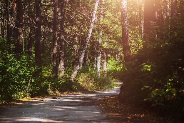 Piękny letni las z różnymi drzewami