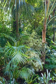 Piękny letni park miejski z roślinami subtropikalnymi