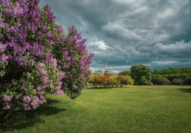 Piękny letni pejzaż z kwitnącymi bzami
