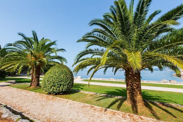 Piękny letni poranny widok parku z palmą w pobliżu plaży milocer (czarnogóra, budva)