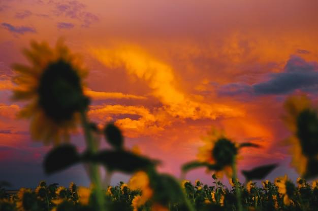 Piękny letni zachód słońca