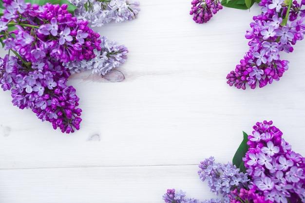 Piękny liliowy na białym tle