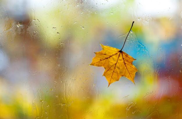 Piękny liść klonowy na mokrym nadokiennym tle. koncepcja pogody jesień