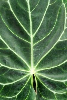 Piękny liść roślinny w zielonym domu botanicznym, niepowtarzalny wzór, roślinność