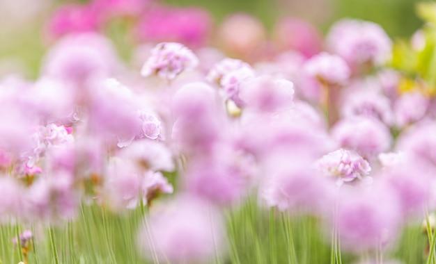 Piękny magiczny zamazany natury tło z zamazywać kwitnienie menchii kwiaty i sunbeam, natura piękna, tonuje projekt wiosny naturę, słońce rośliny.