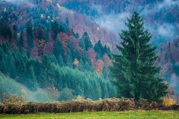 Piękny majestatyczny krajobraz z drzewami iglastymi na górze.