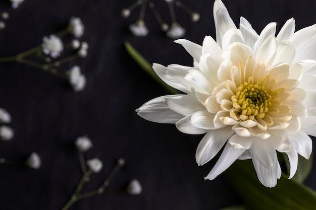 Piękny makro biały kwiat
