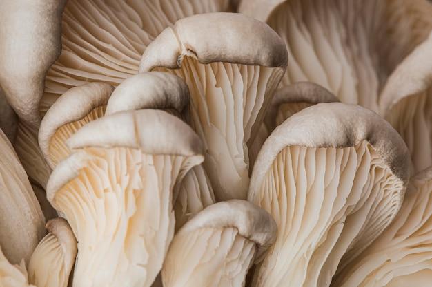 Piękny makro- świeży grzyb