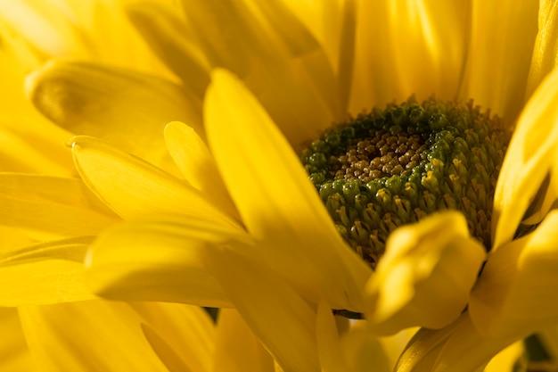 Piękny makro żółty kwiat
