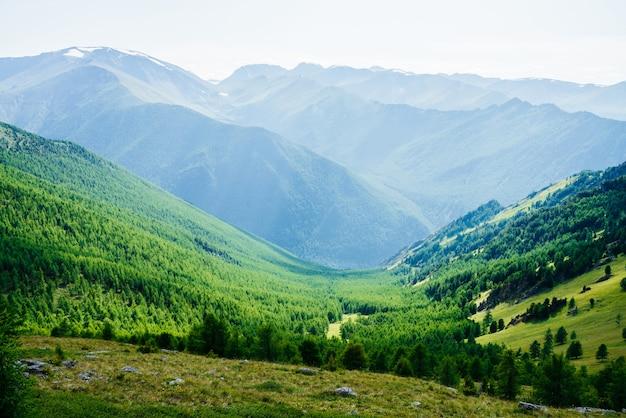 Piękny malowniczy widok na dolinę zielonego lasu i wielkie zaśnieżone góry daleko w słoneczny dzień. niesamowity alpejski krajobraz rozległych połaci w słońcu. cudowna żywa sceneria z zielonymi górami leśnymi.