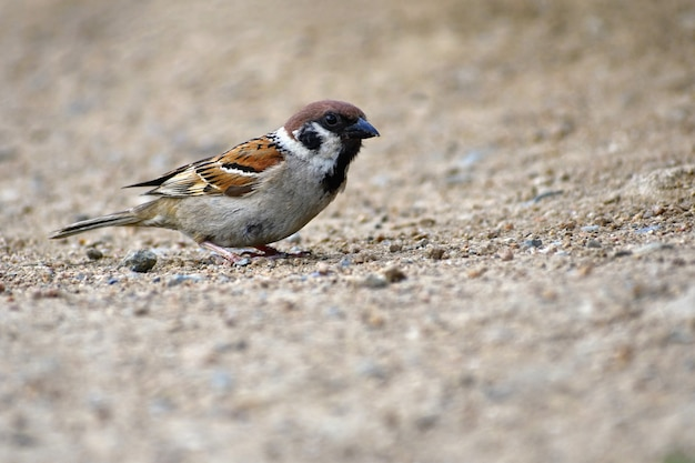 Piękny mały ptak dziki w naturze