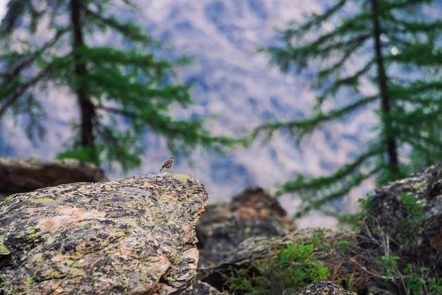 Piękny mały ptak na skale wśród bogatej roślinności w górach. kolorowa sceneria z małą ptaszyną na kamieniu z porostami w średniogórzach. malowniczy krajobraz z florą i fauną. ładny ptak na morenie.