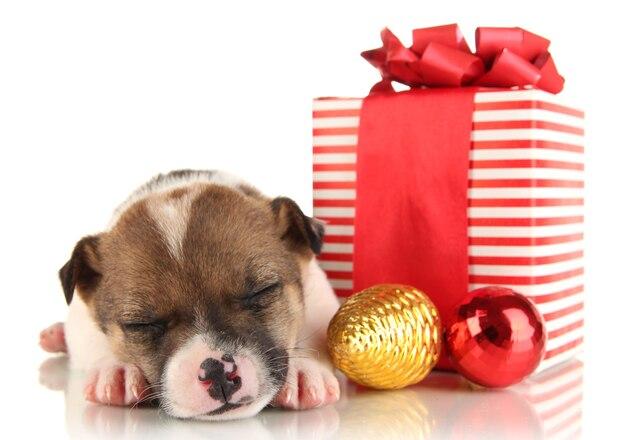 Piękny mały szczeniak otoczony prezentem na białym tle