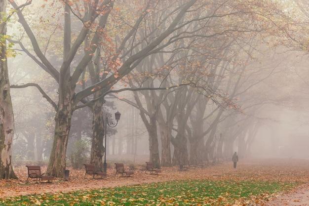 Piękny mglisty krajobraz stryjskiego parku jesienią