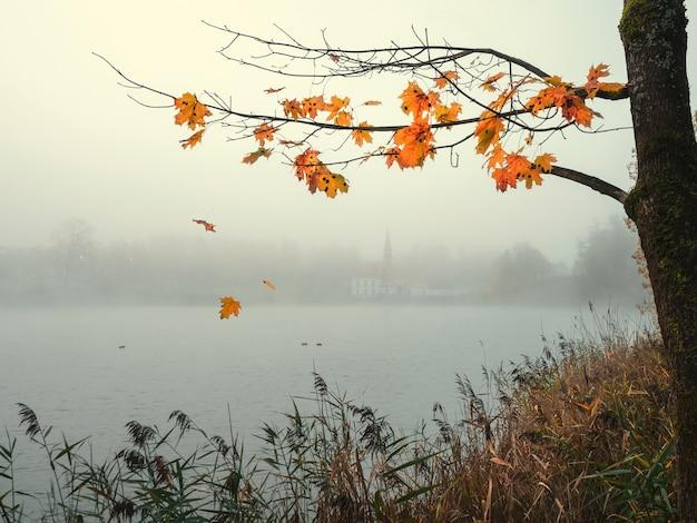 Piękny minimalistyczny jesienny mglisty krajobraz z gałązką klonu i opadającymi liśćmi. gatchina, rosja.