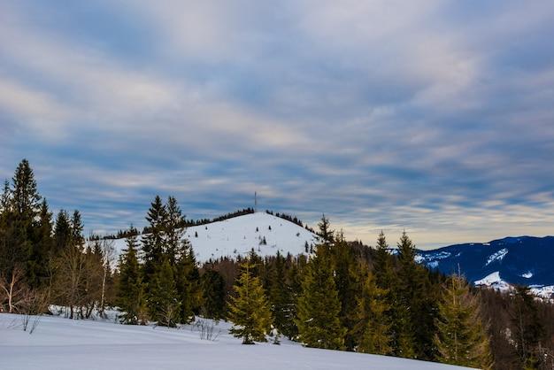 Piękny mistyczny krajobraz drzew iglastych rosnących na wzgórzu na tle wysokiej góry pochmurny zimowy zimny wieczór. koncepcja surowej i zimowej natury