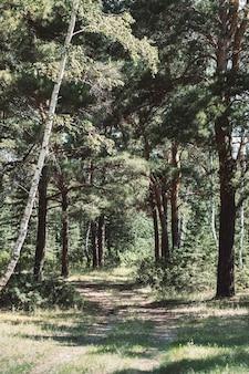 Piękny mistyczny krajobraz leśny z zaczarowanymi drzewami krajobraz ze ścieżką w sennym mglistym lesie