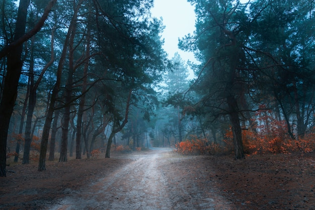 Piękny mistyczny las w błękitnej mgle w jesieni