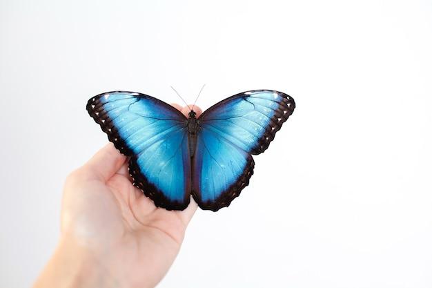 Piękny motyl morpho siedzi na kobiecej dłoni z neutralnym manicure. białe tło. miejsce na tekst. piękno. ochrona skóry. zdjęcie wysokiej jakości