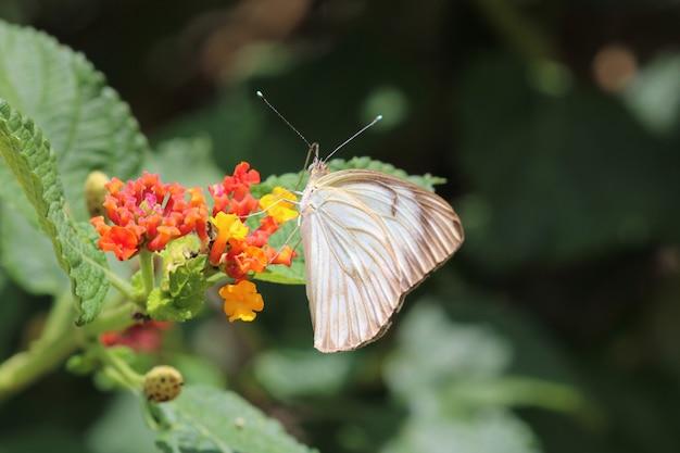 Piękny motyl na czerwonym kwiecie