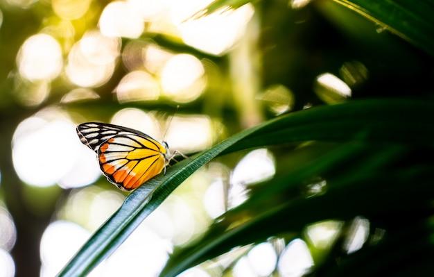 Piękny motyl na drzewie