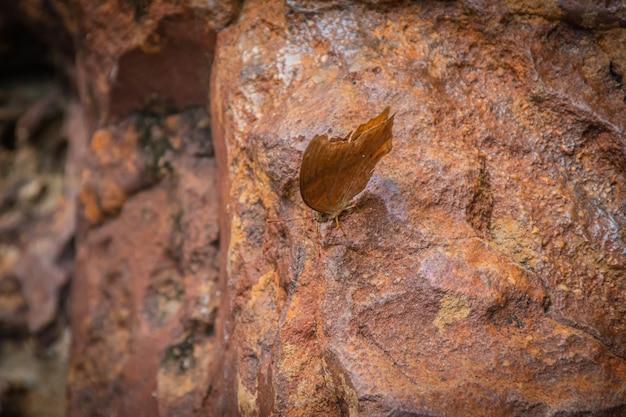 Piękny motyl na kamieniu wodospadu w przyrodzie, kolorowy motyl owad w przyrodzie.