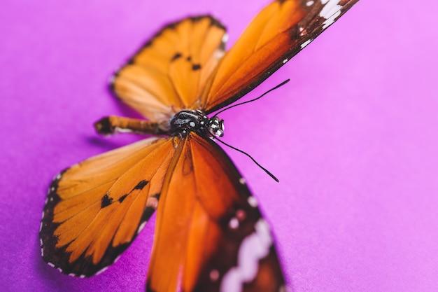 Piękny motyl na kolorowym tle, zbliżenie