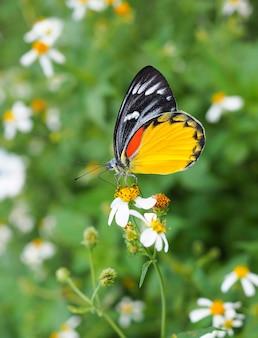 Piękny motyl na kwiacie w ogródzie