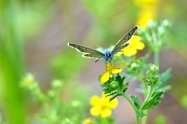 Piękny motyl na kwiacie