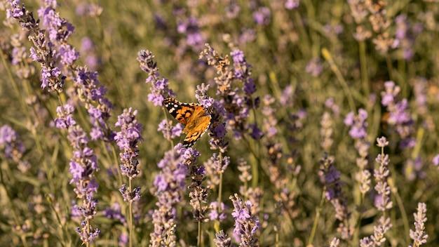 Piękny motyl na kwiatku w naturze
