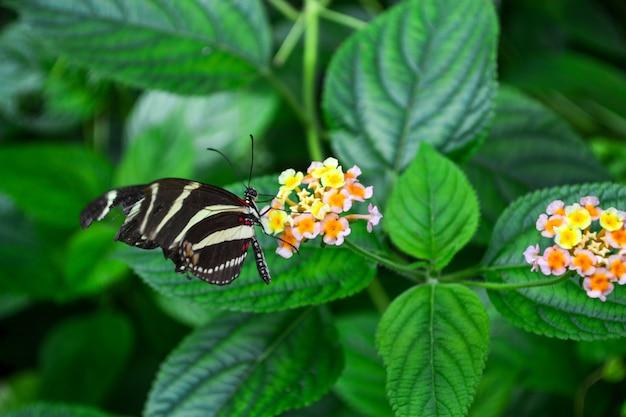 Piękny motyl na kwiatu kwiacie