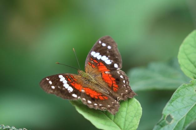 Piękny motyl na liściu w przyrodzie