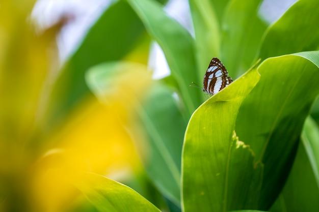 Piękny motyl na zielonych liściach w tropikalnym ogrodzie