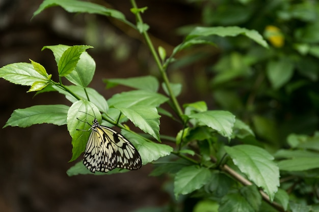 Piękny motyl, owad na zielonym tle przyrody, sfotografowany w schmetterlinghaus,