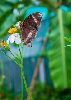 Piękny motyl pije słodkiego kwiatu w ogródzie