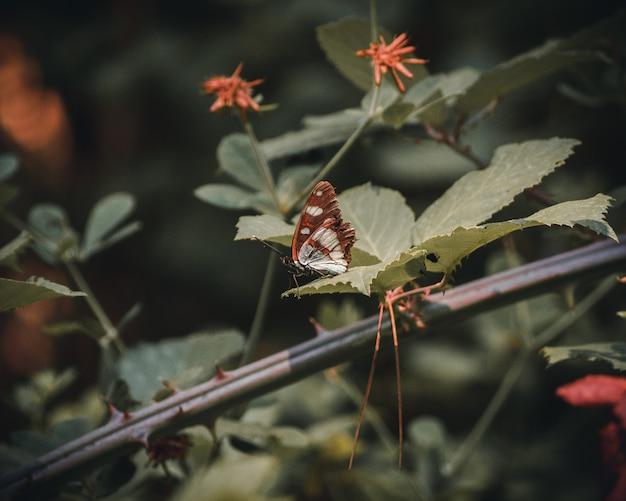 Piękny motyl pozuje na liściu rośliny