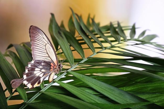 Piękny motyl siedzący na tropikalnym liściu