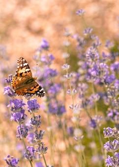 Piękny motyl w koncepcji natury