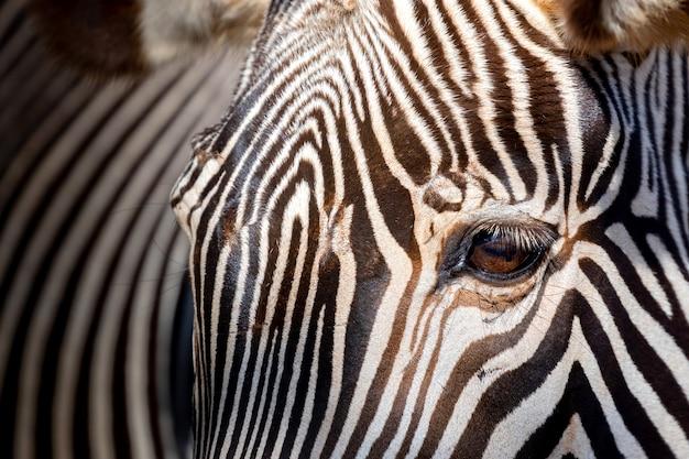Piękny nadruk zwierzęcy