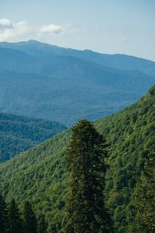 Piękny naturalny krajobraz z kaukazem i drzewami