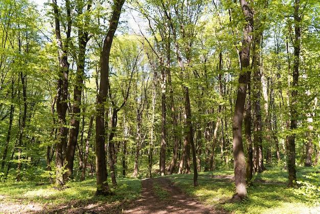 Piękny naturalny zielony las