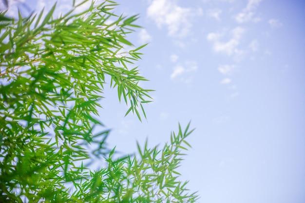 Piękny nieba tło z bambusowymi liśćmi.