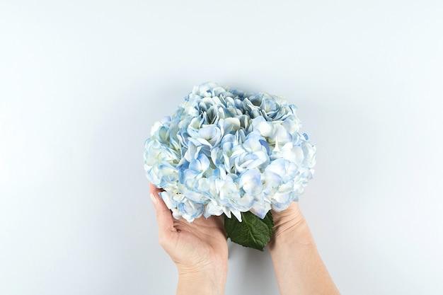 Piękny niebieski kwiat hortensji
