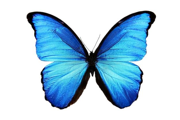 Piękny niebieski motyl na białym tle