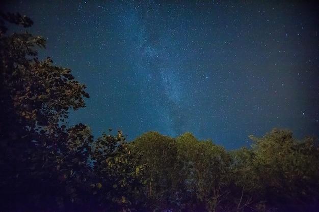 Piękny nocny krajobraz nieba z gwiazdami i drzewami