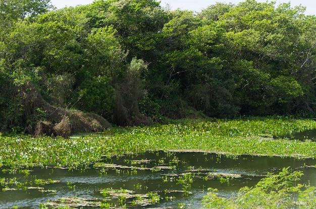 Piękny obraz brazylijskich terenów podmokłych