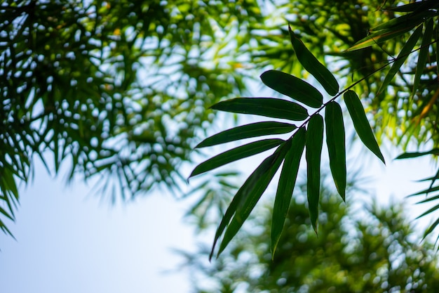 Piękny obraz liści i drzew bambusa dla stylu życia w azji