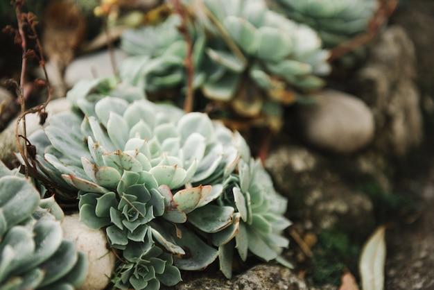 Piękny obraz różnych kaktusów w piasku