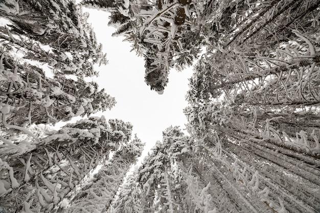 Piękny obraz zimowy