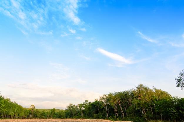 Piękny ogród w parku z zielonymi pastwiskami zielonych drzew i błękitnego nieba.